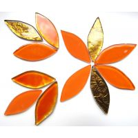 Tiger Lily Mix: 12 Pieces